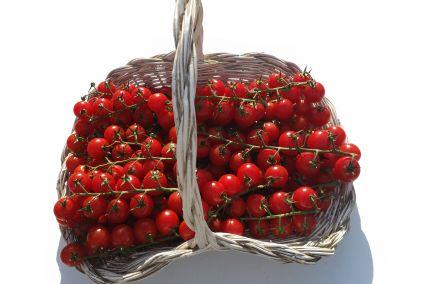 Tomate cerise Provence