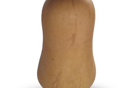 buternut