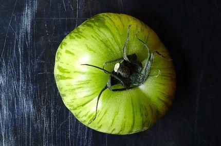 Tomate ancienne green zebra