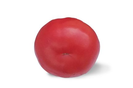 Tomate ancienne cul de singe